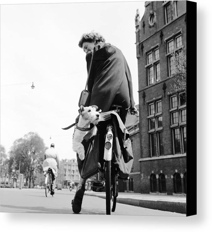 Mid Adult Canvas Print featuring the photograph Doggy Bag by Harry Kerr