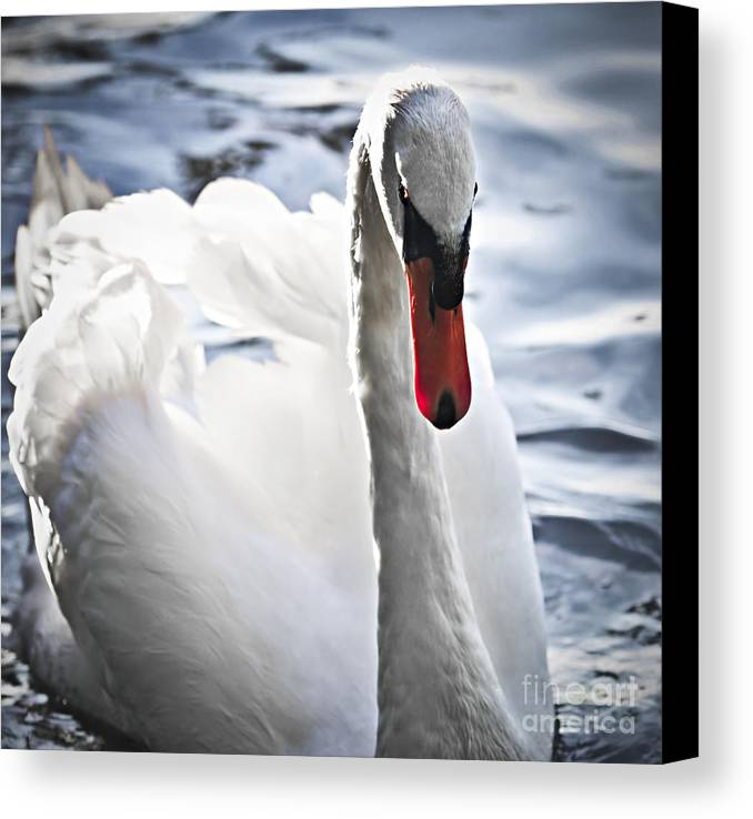 Swan Canvas Print featuring the photograph White Swan by Elena Elisseeva