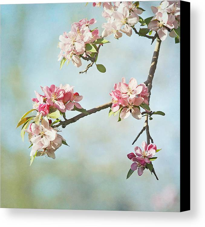 Nature Canvas Print featuring the photograph Blossom Branch by Kim Hojnacki