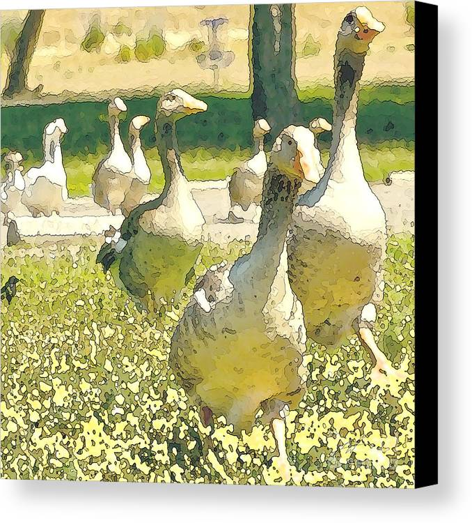 Flock Of Geese Canvas Print featuring the digital art Duck Duck Goose by Artist and Photographer Laura Wrede