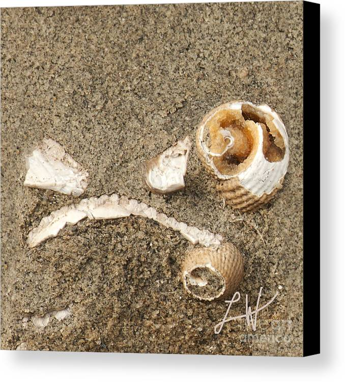 Fossils From Capitola Beach Canvas Print featuring the photograph In A Forgotten Time by Artist and Photographer Laura Wrede