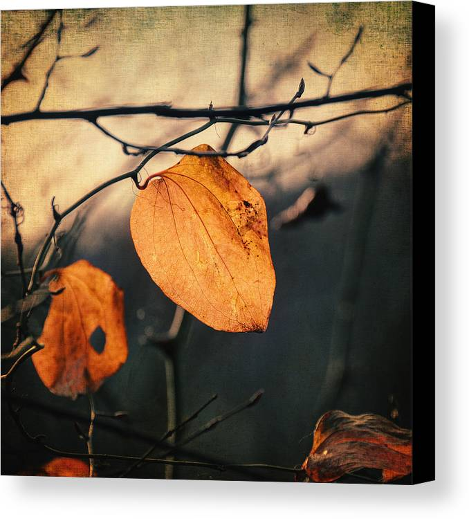 Leaf Canvas Print featuring the photograph Last Leaves by Taylan Soyturk