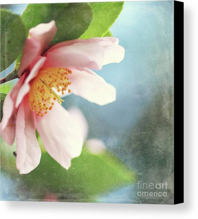 Camellia Canvas Print featuring the photograph Pink Camellia by Sylvia Cook