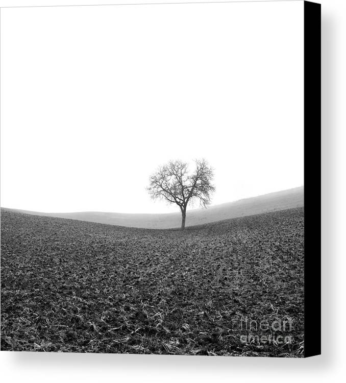 Wintry Canvas Print featuring the photograph Solitary Tree In Winter. Auvergne. France by Bernard Jaubert
