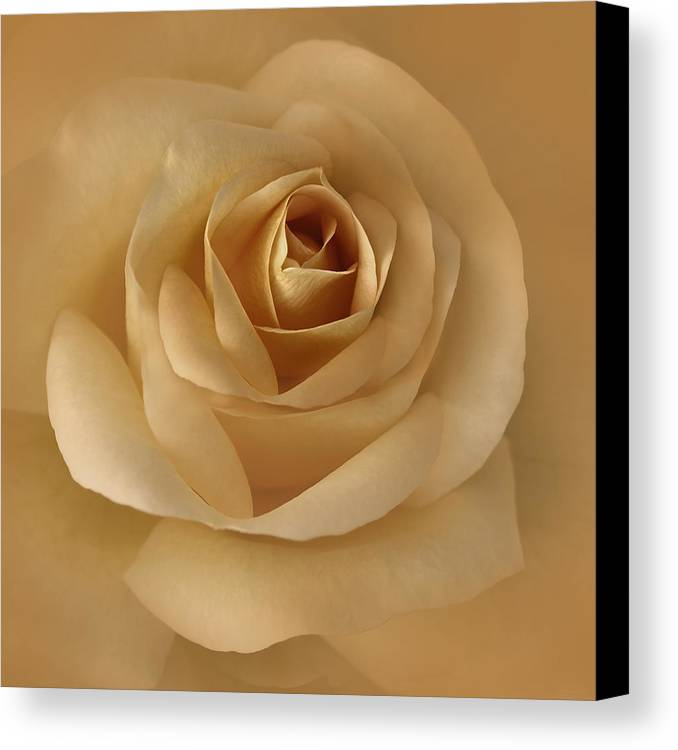 Rose Canvas Print featuring the photograph The Golden Rose Flower by Jennie Marie Schell