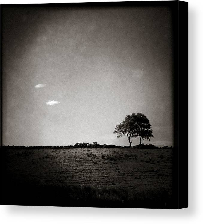 Landscape Canvas Print featuring the photograph Two Clouds And A Tree by Dave Bowman