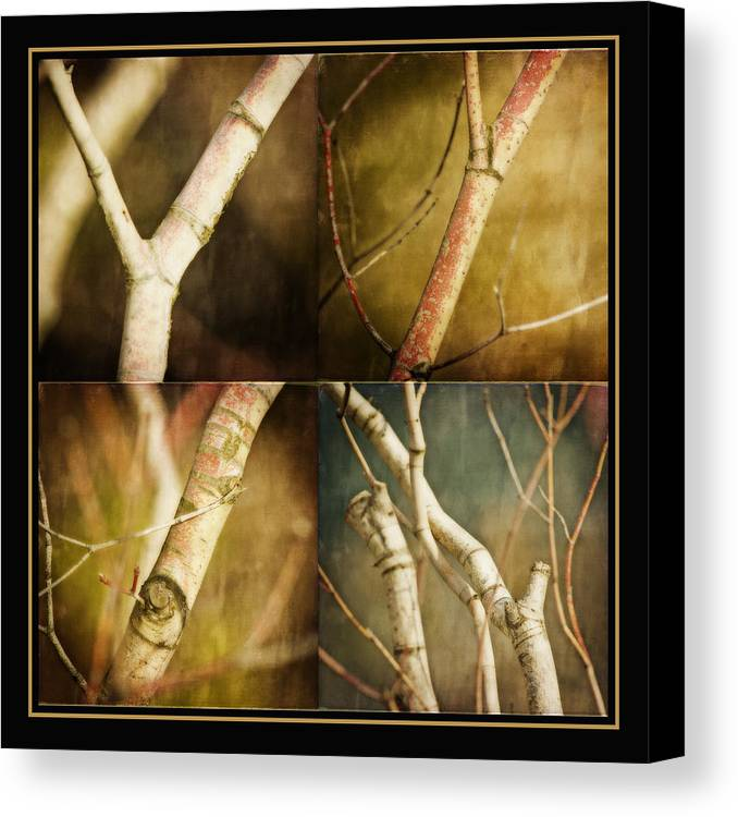 Branches Canvas Print featuring the photograph Branching Out by Bonnie Bruno