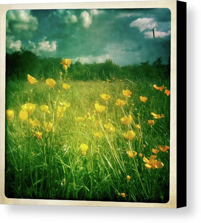 Square Canvas Print featuring the photograph Buttercups by Neil Carey Photography