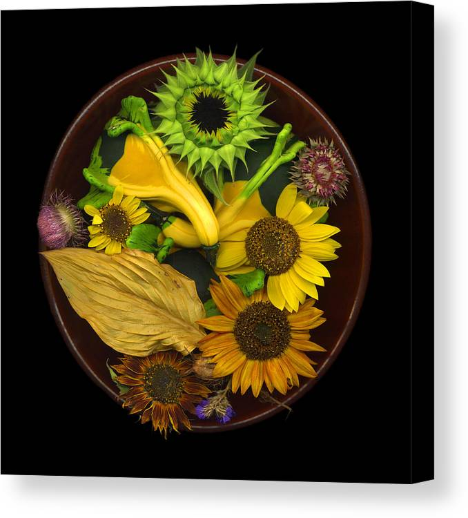 Sunflower Canvas Print featuring the photograph Fall Colors by J Arthur Davis