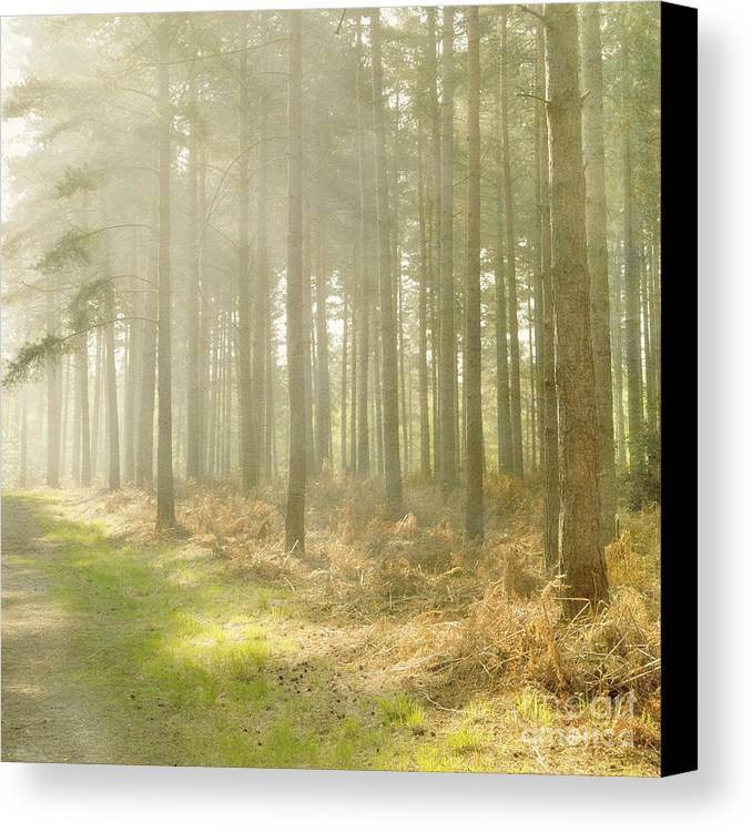 Misty Canvas Print featuring the photograph Misty Sunrise by Paul Grand