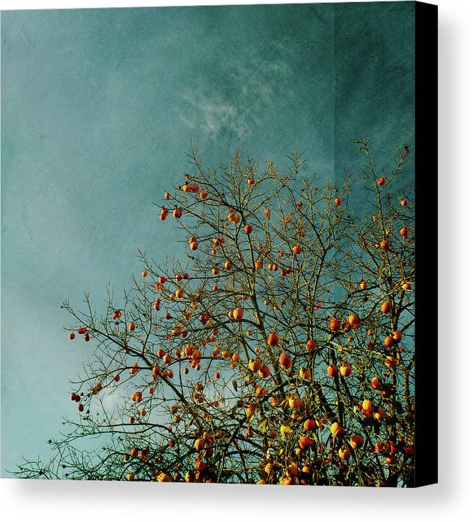 Square Canvas Print featuring the photograph Persimmon B O U N T Y by Paul Grand Image