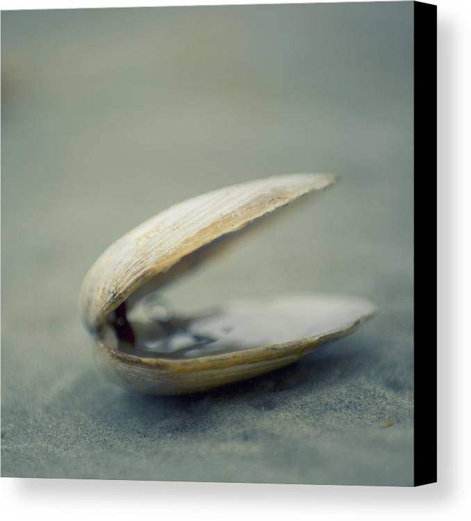 Square Canvas Print featuring the photograph Shell by Jill Ferry Photography