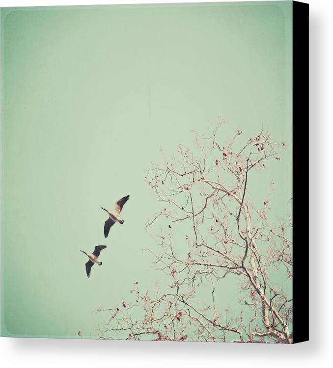 Square Canvas Print featuring the photograph Two Geese Migrating by Laura Ruth