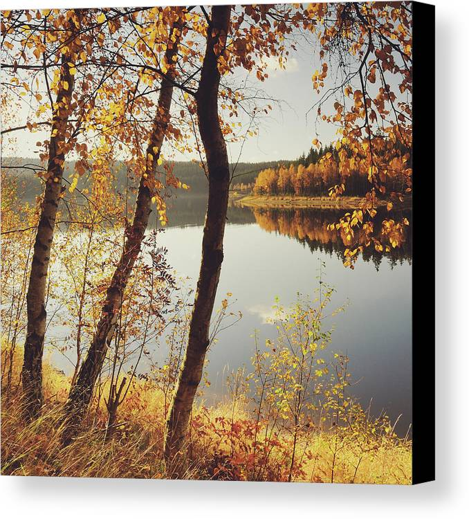 Square Canvas Print featuring the photograph Birch Trees And Reflected Autumn Colors by Stefan Mendelsohn