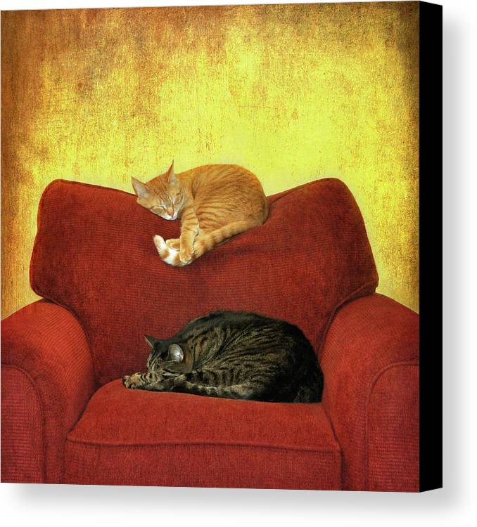 Square Canvas Print featuring the photograph Cats Sleeping On Sofa by Nancy J. Koch, Pittsburgh, PA