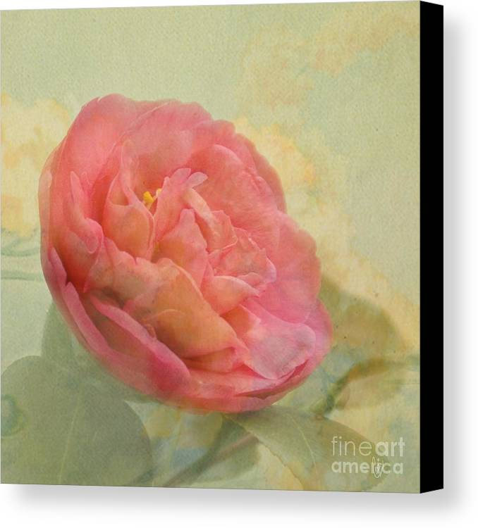 Camellia Canvas Print featuring the photograph February Camellia by Cindy Garber Iverson