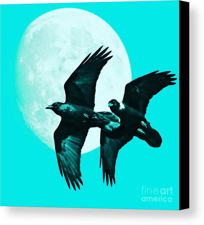 Cyan Canvas Print featuring the photograph Ravens Of The Moon . Cyan Square by Wingsdomain Art and Photography