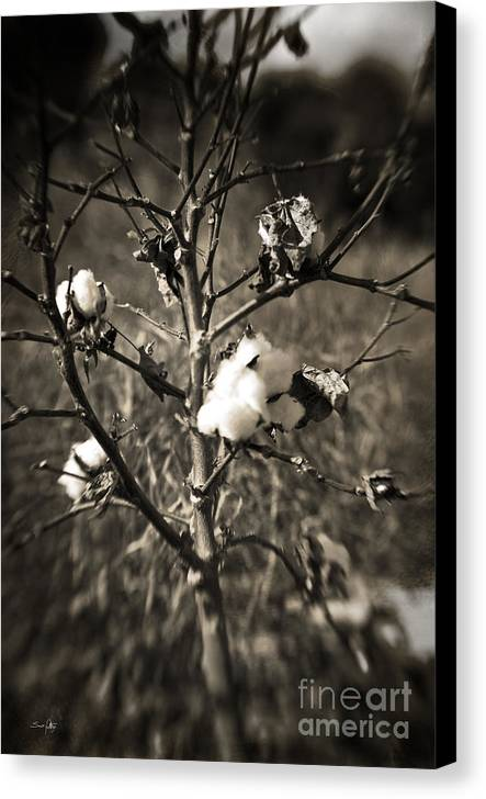 Cotton Canvas Print featuring the photograph Lonesome by Scott Pellegrin