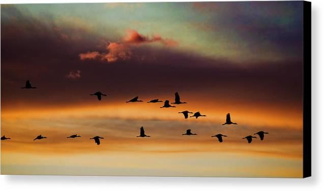 Sandhill Cranes Take The Sunset Flight Canvas Print by Bill Kesler