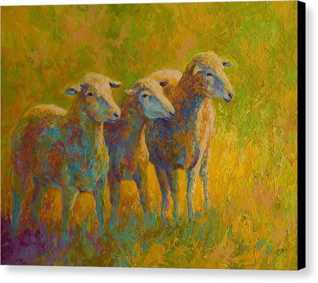 Sheep Trio Canvas Print by Marion Rose