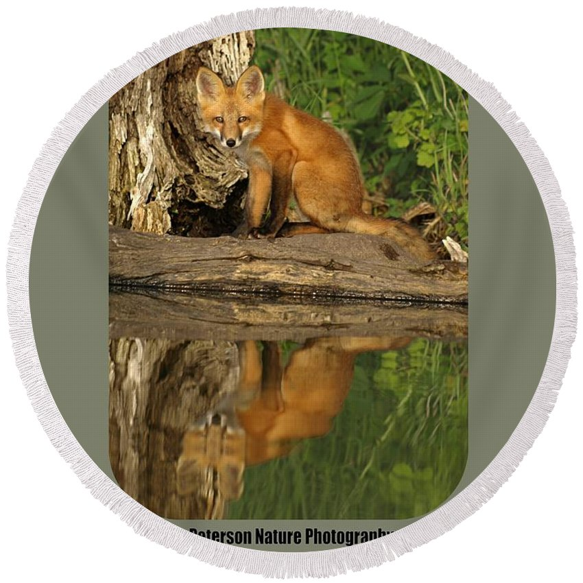 Fox reflection shirt round beach towel for sale by james peterson
