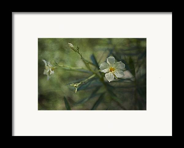 Flowers Framed Print featuring the photograph ... by Mario Celzner