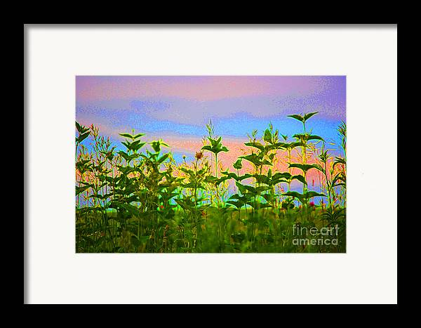 First Star Art Framed Print featuring the photograph Meadow Magic by First Star Art