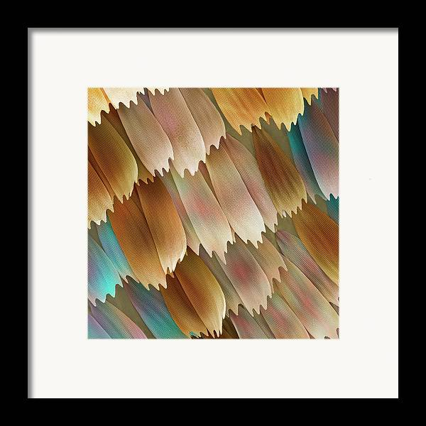 Morpho Aega Framed Print featuring the photograph Butterfly Wing Scales by Power And Syred