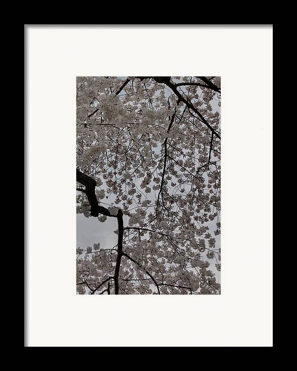 America Framed Print featuring the photograph Cherry Blossoms - Washington Dc - 011342 by DC Photographer