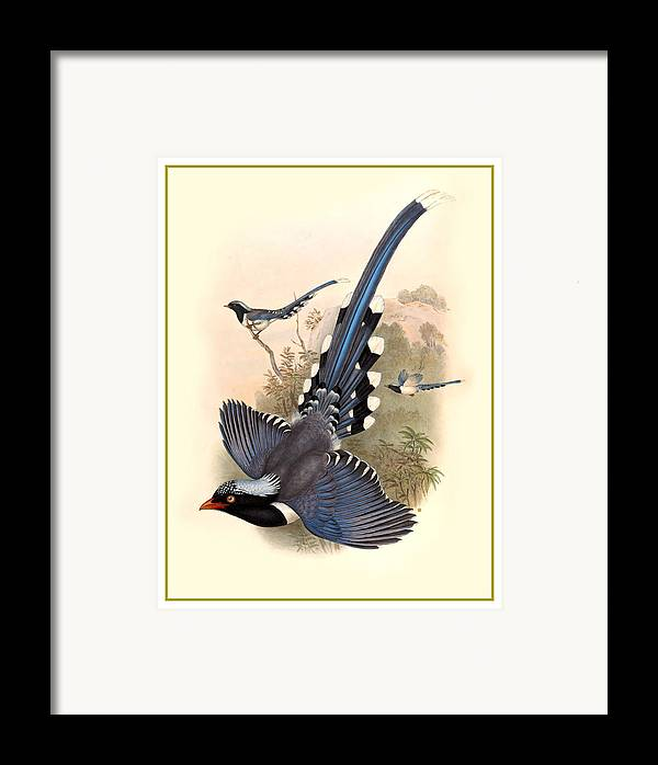 John Gould Birds Framed Print by Gary Grayson