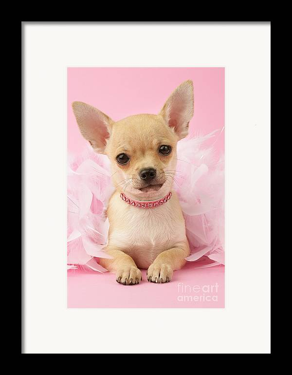 Puppy Framed Print featuring the digital art Pink Times by Greg Cuddiford
