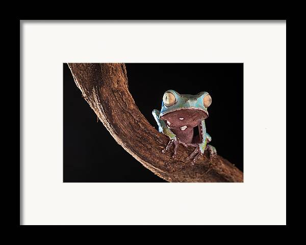Tree Frog Framed Print featuring the photograph Tree Frog by Dirk Ercken