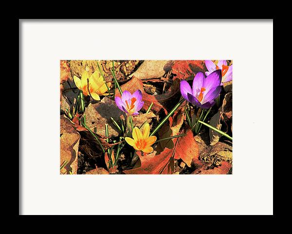 Flowers Framed Print featuring the photograph A New Season Blooms by Karol Livote