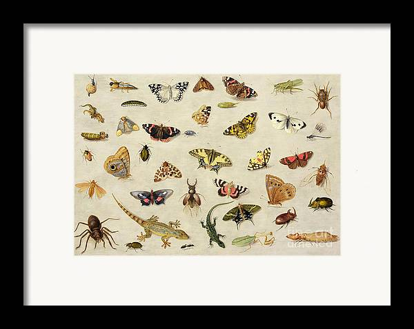 Collection Framed Print featuring the painting A Study Of Insects by Jan Van Kessel