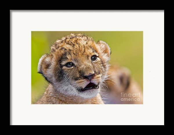 Khao Kheow Open Zoo Framed Print featuring the photograph Age Of Innocence by Ashley Vincent