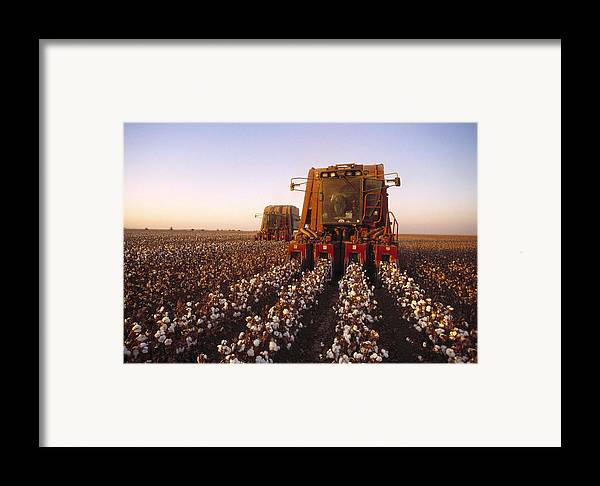 Plant Framed Print featuring the photograph Agriculture - Cotton Harvesting San by Ed Young