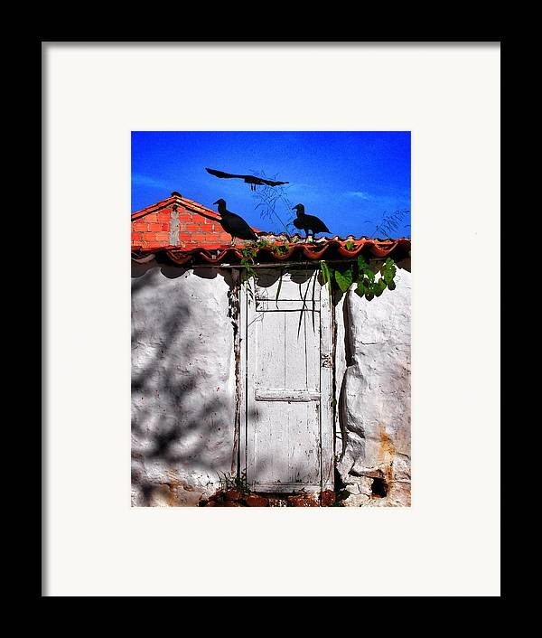 Amigos Negros Framed Print featuring the photograph Amigos Negros by Skip Hunt