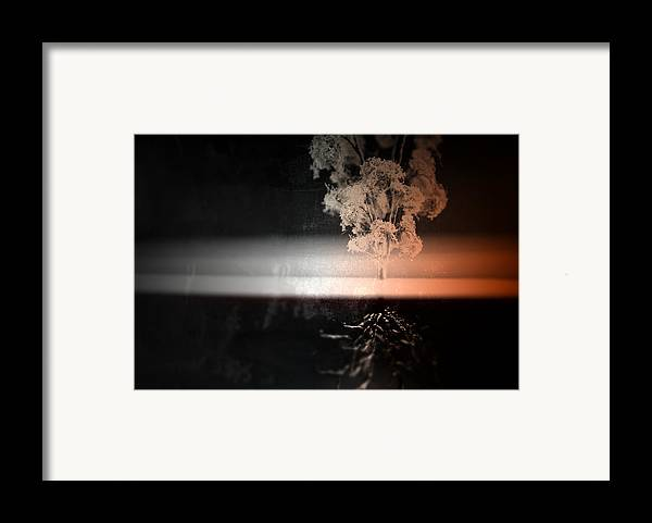 Tree Framed Print featuring the photograph Anchor by Mark Ross