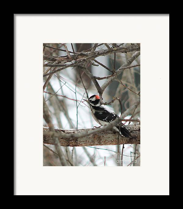 Downy Framed Print featuring the photograph Anybody Home by Leone Lund
