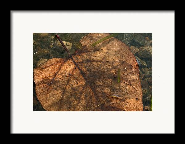 Nature Framed Print featuring the photograph Atres 11 by Karol Livote
