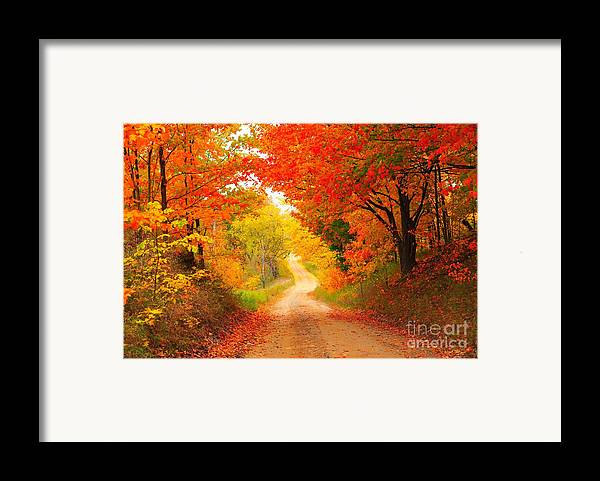 Autumn Framed Print featuring the photograph Autumn Cameo 2 by Terri Gostola