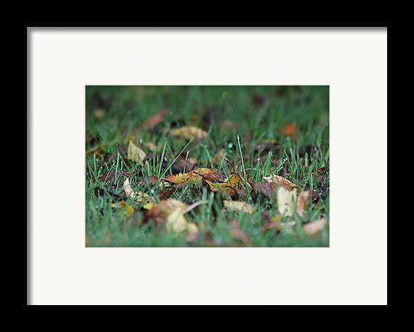 Dew Framed Print featuring the photograph Autumn Morning by Katie Wing Vigil