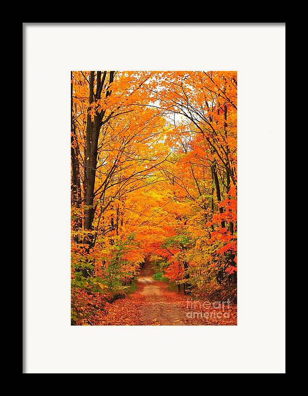 Autumn Framed Print featuring the photograph Autumn Tunnel Of Trees by Terri Gostola