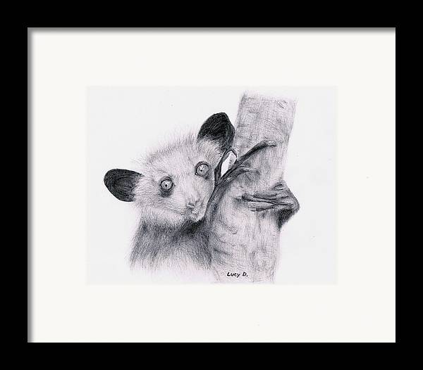 Wildlife Framed Print featuring the drawing Aye-aye by Lucy D