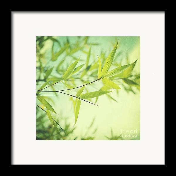 Bamboo Framed Print featuring the photograph Bamboo In The Sun by Priska Wettstein