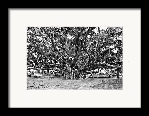 Banyan Tree Framed Print featuring the photograph Banyan Tree by Scott Pellegrin