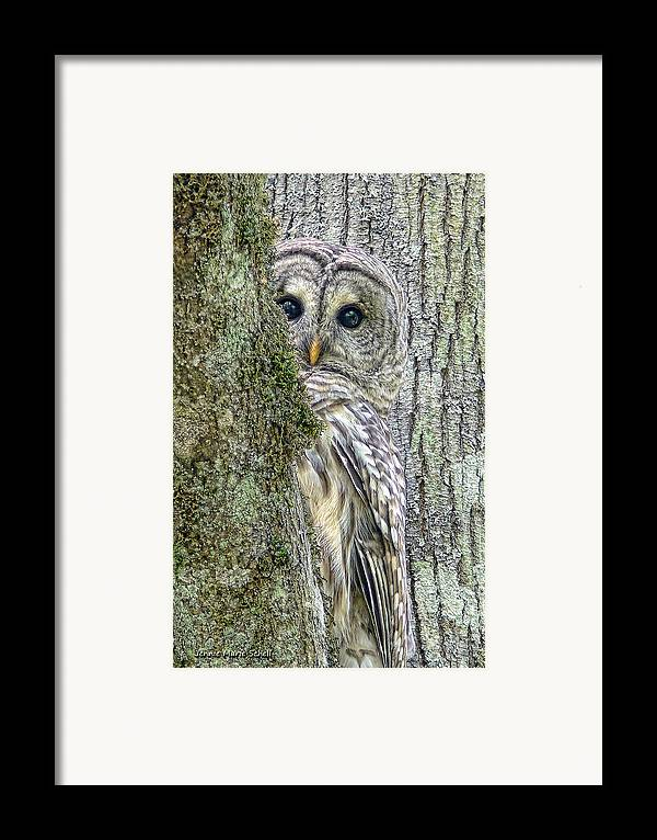 Owl Framed Print featuring the photograph Barred Owl Peek A Boo by Jennie Marie Schell