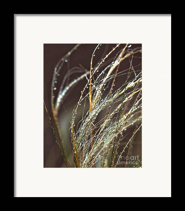 Sea Grass Framed Print featuring the photograph Beads Of Water On Sea Grass by Artist and Photographer Laura Wrede