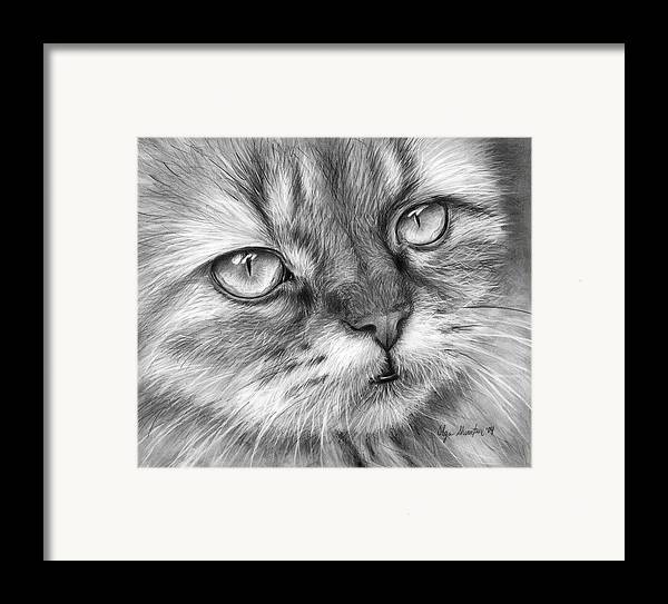 Beautiful Cat Framed Print featuring the drawing Beautiful Cat by Olga Shvartsur