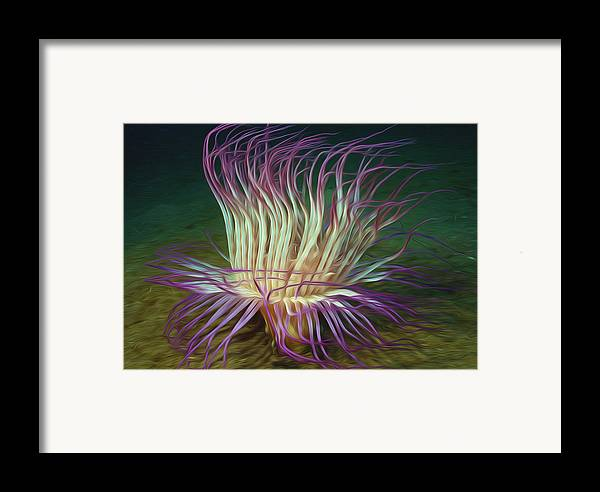 Starfish Framed Print featuring the painting Beautiful Sea Anemone 1 by Lanjee Chee